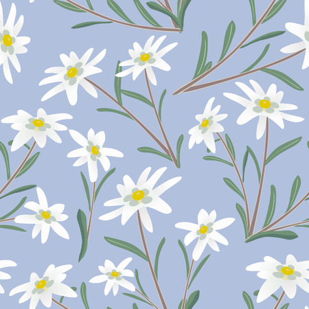 swiss alps: Seamless pattern with edelweiss flowers. Vector illustration.