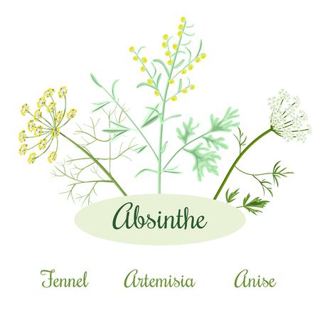 absinthe: Absinthe ingredients. Grand wormwood or Artemisia absinthium , green anise or Pimpinella anisum, sweet fennel or Foeniculum vulgare. Vector illustration.