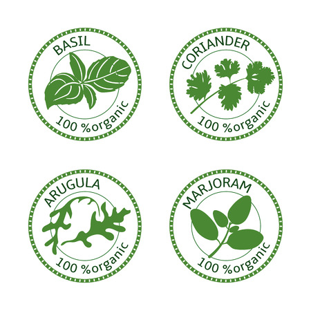 marjoram: Set of herbs labels. 100 organic. Greenery collection. Vector illustration. Basil, arugula marjoram coriander Illustration