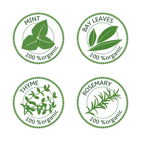 허브 레이블 집합입니다. 100 % 유기농. 녹색 컬렉션입니다. 벡터 일러스트 레이 션. 로즈마리, 민트 베이 잎 백리향