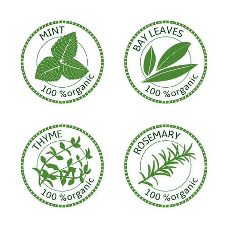 Set of herbs labels. 100 percent organic. Greenery collection. Vector illustration. Rosemary, mint bay leaves thyme