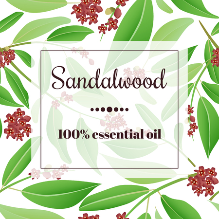 Sandalwood 100 % essential oil. Square semitransparent banner with herbal elements at background. Иллюстрация
