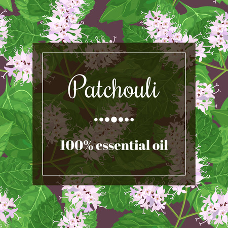 semitransparent: Patchouli 100 % essential oil. Square semitransparent banner with herbal elements at background.