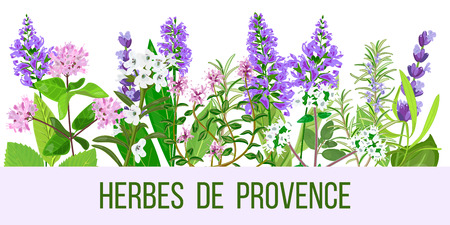 tarragon: Herbes de Provence color vector illustration, wide format. Can be used as brochure poster, banner, web, for cover, textile, wallpaper