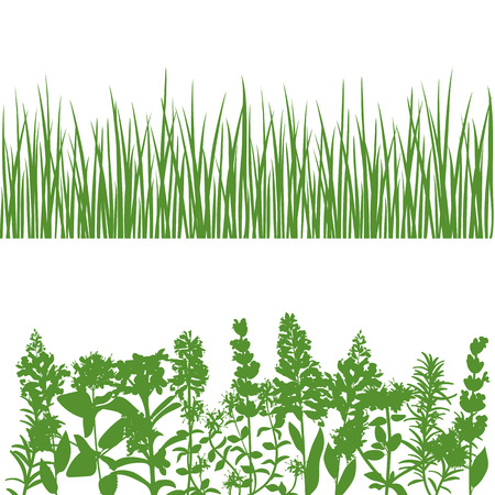 wild flowers: Grass, wild flowers and plants detailed silhouettes. Isolated on white. Herbs garden. For web, wallpaper, decoration, textile, prints banners wrapping packing