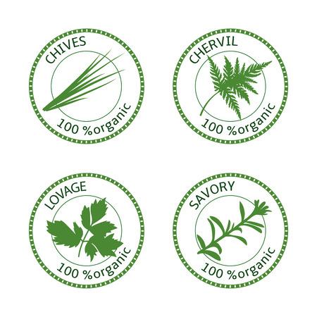 허브 레이블 집합입니다. 100 유기농. 녹색 컬렉션입니다. 짭짤한, lovage, chives, chervil. 벡터 일러스트 레이 션. 화장품, 레스토랑, 매장 건강 관리 가격표