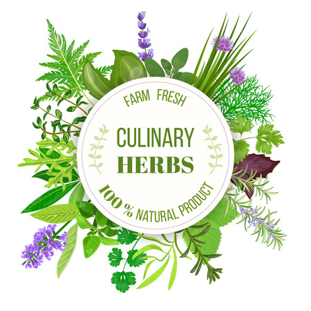 Culinary herbs big set with round emblem. Vector illustration. Design for cosmetics, restaurant, market, menu, market, health care products, spa salon, ready, icon, banner web tag template