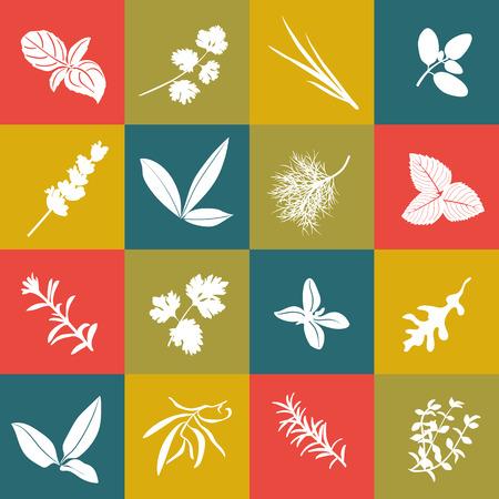 chives: Herbs hand drawn vector squared icon big set. Popular culinary herbs. Basil, coriander, arugula, marjoram, mint, bay leaves, savory, rosemary, sage tarragon thyme parsley oregano dill lavender chives