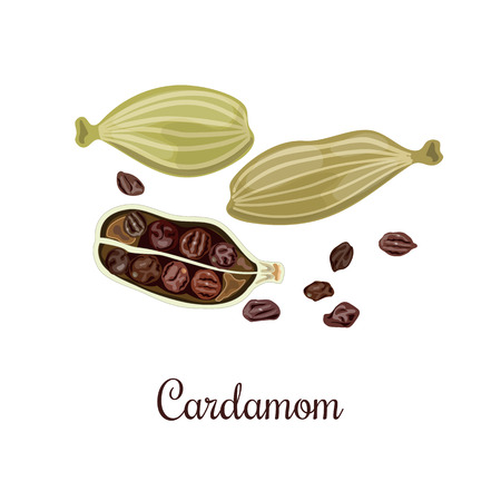cardamum: Cardamom vector illustration. Culinary seasoning. Cooking Spice. Seasoning for food. Cardamom grains. Cardamom spice. Cardamon. Green and brown. Cardamum Illustration