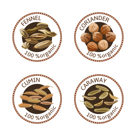 coriander: Set of herbs labels. 100 organic. Spice collection. Vector illustration. Fennel, coriander, caraway, cumin. Brown stamps