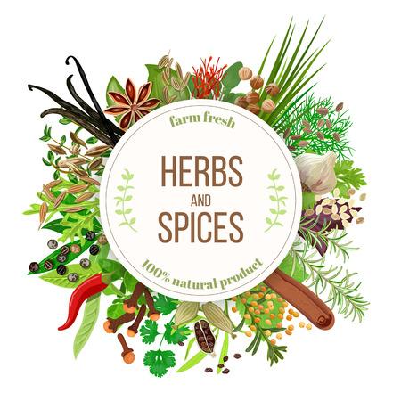 Las hierbas culinarias y especias gran conjunto con el emblema redondo. Manojo de condimentos para cocinar. Para cosméticos, restaurante, tienda, mercado, productos para el cuidado de la salud natural. Se puede utilizar como diseño, precio, etiqueta