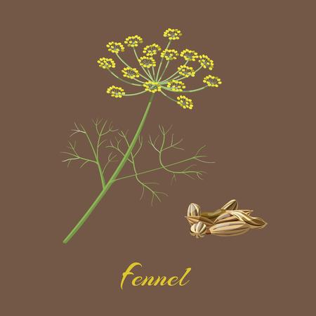 회향 Foeniculum vulgare의가. 꽃, 잎, 씨앗. 벡터 일러스트 레이 션