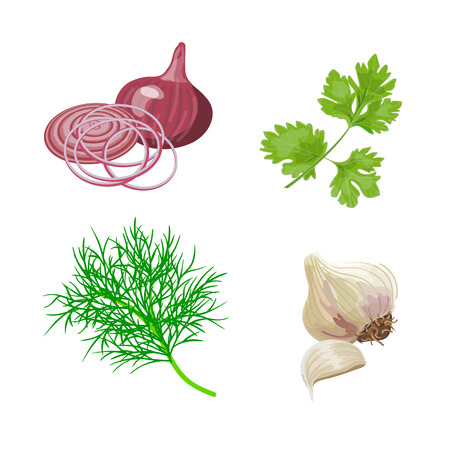 vegetal: Set with fresh dill, parsley, garlic, red onion. Popular cooking herbs and spices. Vector illustration. Illustration