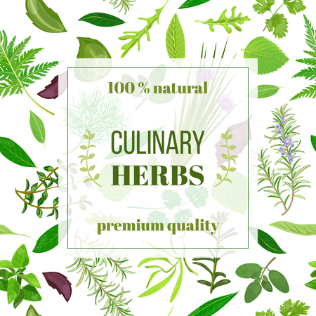 marjoram: Cooking herbs seamless pattern vector banner set. Popular culinary herbs.