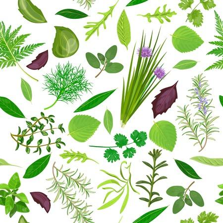 oregano: Cooking herbs seamless pattern vector set.