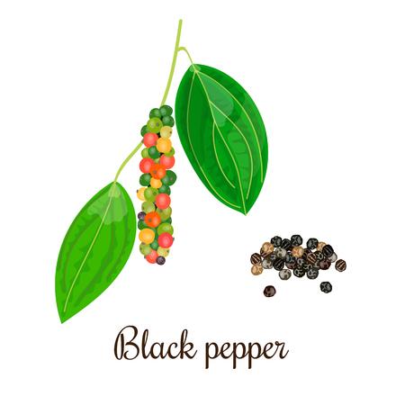 Blühender schwarzer Pfeffer mit Samen. String von Grün, Rot, Gelb und schwarze Pfefferkörner auf einem Zweig. Unreife und reife. Schwarzer Pfeffer. Vektor-Illustration. Auch Piper nigrum. Für Menü, Kosmetik, Tag