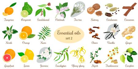 Big set of essential oil plants. Vanilla, cinnamon, jasmine, tea tree, bergamot, sandalwood, patchouli etc.