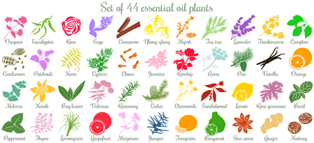 Big set of 44 essential oil plants. flat style, colored