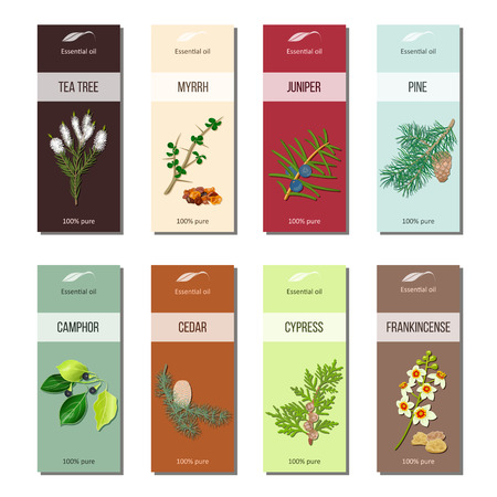 tea tree: Essential oil labels collection. Tea tree, myrrh, juniper, pine , cinnamon, camphor, cedar, cypress, frankincense Illustration