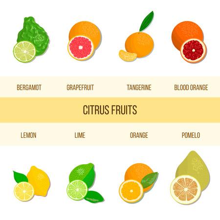 Fresh Citrus set. Bergamot, lemon, grapefruit, lime, mandarin, pomelo, orange, blood orange with slices