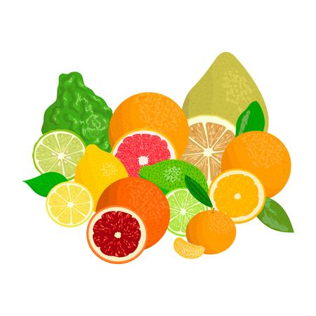 Citrus fruits. Bergamot, lemon, grapefruit, lime, mandarin, pomelo, orange, blood orange with slices