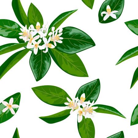 perfumery concept: Neroli theme. fleur dorange, Seamless pattern vector flowers and leaves