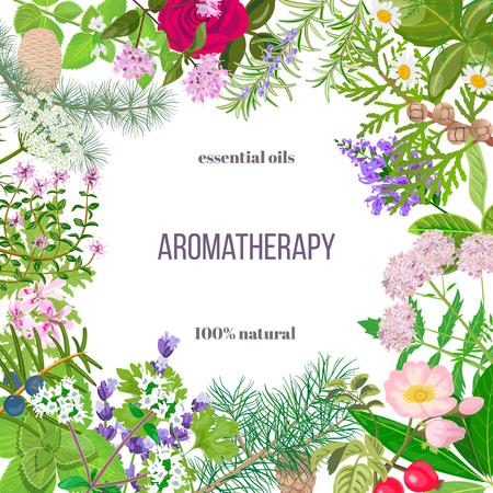 Big set de plantes oléagineuses essentielles. Ornement avec le texte. Rose, Géranium, lavande, menthe, mélisse, camomille, le cèdre, le pin, le genévrier, églantier, etc.