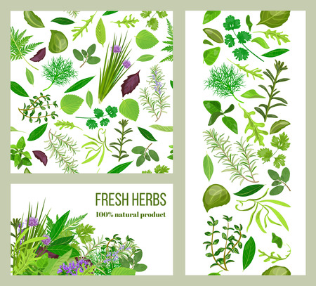 tarragon: Realistic popular culinary herbs. Labels set. Shop sign. Stripes and cards