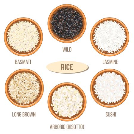 jasmine rice: Different types of rice in bowls. Basmati, wild, jasmine, long brown, arborio, sushi Illustration