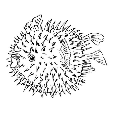 pez globo: Blowfish or diodon holocanthus. Sketh illustration