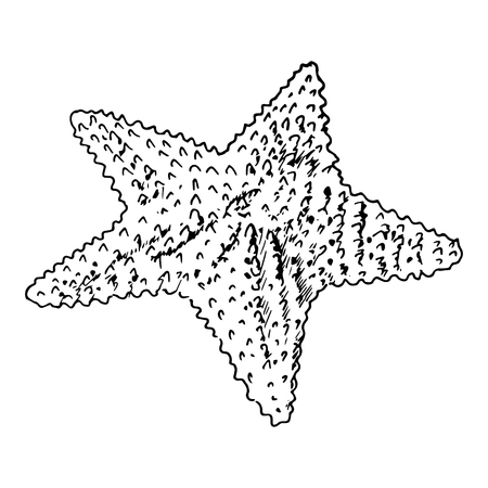 oceanside: Starfish realistic sketch. Sea Star, isolated on white. vector illustration. Realistic hand drawn outline. for cards, invitations, wrapping, textile, prints, web design. Illustration