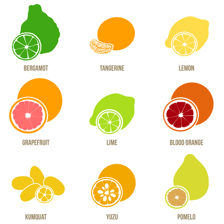 Citrus fruits vector flat set. Çizim