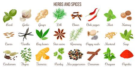 Big vector set of popular culinary herbs and spices