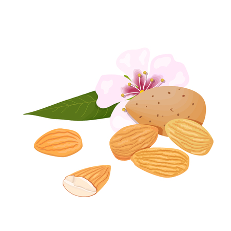 almonds. nuts in skins and peeled with leaf and flower Illustration