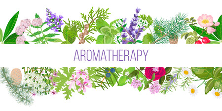 Big banner set of popular essential oil plants. Ornament with text aromatherapy