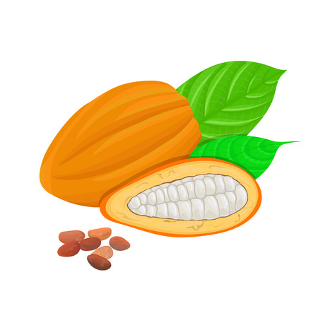 perfumery: Fresh Cocoa fruit. Cacao pod leaves and beans