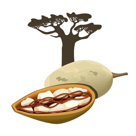 Baobab tree and fruit pod Isolated object. Adansonia. Superfood baobab fruit. Vector illustration. Illustration