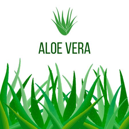 Aloe Vera poster with text. Herbal medicine Illustration