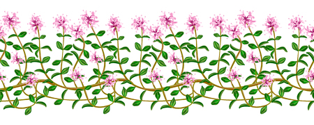 homeopathic: Flowering fresh thyme. seamless pattern Illustration
