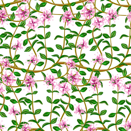 Flowering fresh thyme. seamless pattern Illustration