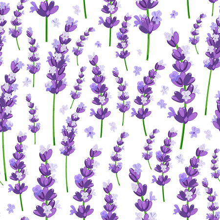 Seamless pattern of provence violet lavender flowers on a white background. Vector illustration. Stock Illustratie