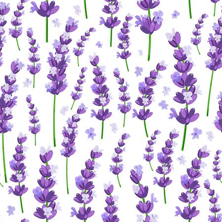Seamless pattern of provence violet lavender flowers on a white background. Vector illustration. Illustration
