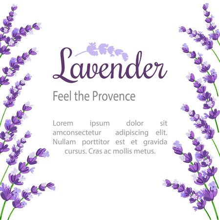 homeopathic: Lavender Card with flowers. Vintage Label with provence violet lavender. design for natural cosmetics, beauty store, health care products, perfume, essential oil. Can be used as wedding background. Illustration