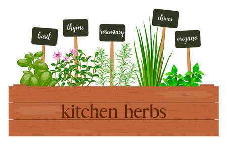Wooden crate of farm fresh cooking herbs with labels in wooden box. Greenery basil, rosemary, chives, thyme, oregano with text. Horticulture. houseplants. Gardening. For advertising, poster, banner Ilustração Vetorial