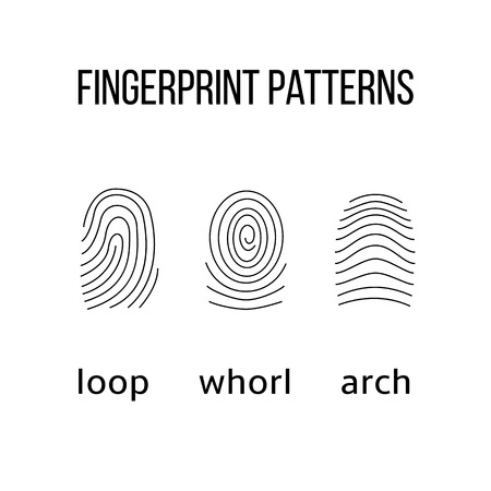 Three fingerprint types on white background. Loop, whorl, arch patterns. Vector illustration.
