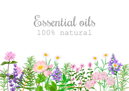 Popular essential oil plants label set. Peppermint, lavender, sage, melissa, Rose, Geranium, Chamomile, oregano etc For cosmetics spa health care aromatherapy, advertising, tag