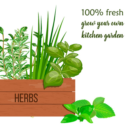 Wooden crate of farm fresh cooking herbs in wooden box with place for text . Greenery basil, rosemary, chives, thyme, oregano with text. Horticulture. houseplants. Gardening. For advertising, poster