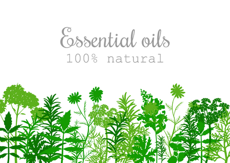 Popular essential oil plants label set in green color. Peppermint, lavender, sage, melissa, Rose, Geranium, Chamomile, oregano etc For cosmetics spa health care aromatherapy, advertising, tag