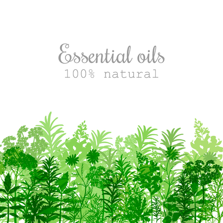 Popular essential oil plants label set in green color Peppermint, lavender, sage, melissa, Rose, Geranium, Chamomile, oregano etc For cosmetics spa health care aromatherapy, advertising, tag