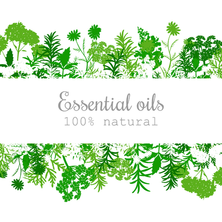人気のある精油植物のラベル ストライプ上のテキストで設定。ペパーミント、ラベンダー、セージ、メリッサ、ローズ、ゼラニウム、カモミール、オレガノ化粧品スパ医療アロマセラピー、広告、タグなど 写真素材 - 80903471